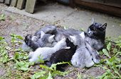 Cat Mom Nursing Kittens
