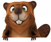 stock photo of beaver  - Beaver - JPG