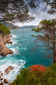 Coastal Landscape. Red Flowers And Pine Trees Grow On The Rocks. Adriatic Sea, Montenegro