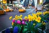 image of planters  - Spring planters and an early morning view of Times Square - JPG