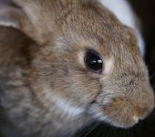 image of rabbit hutch  - Young rabbit animal farm and breeding. Whole background. ** Note: Shallow depth of field - JPG