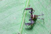pic of eat me  - Spider leaves me standing still on the leaf - JPG