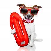stock photo of lifeguard  - funny lifeguard dog with red lifesaver buoy - JPG
