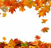 stock photo of fall decorations  - Autumn falling leaves isolated on white background - JPG