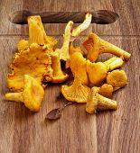 pic of chanterelle mushroom  - Heap of Fresh Raw Chanterelles Mushrooms closeup on Wooden Cutting Board - JPG