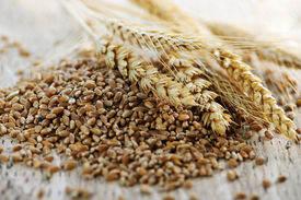 stock photo of whole-grain  - Closeup on pile of organic whole grain wheat kernels and ears - JPG