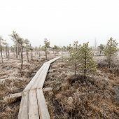 foto of frostbite  - wooden boardwalk in frosty winter bog landscape with frozen nature  - JPG