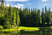 foto of early morning  - bower on the lake shore in pine forest early in the morning - JPG