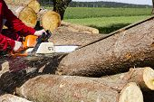 foto of sawing  - Man sawing a log in his back yard with orange saw - JPG