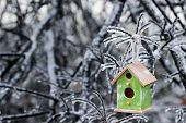 image of storms  - Brown and green wood birdhouse hanging on ice covered tree branches after ice storm