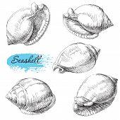 picture of beach shell art  - Beauty set of various sea shells vector - JPG