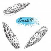 image of beach shell art  - Beauty set of various sea shells vector - JPG