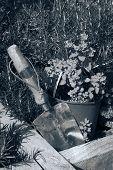 pic of trowel  - stainless steel garden trowel in a herb garden in Ireland toned - JPG
