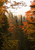 Постер, плакат: Northwoods Autumn Dawn