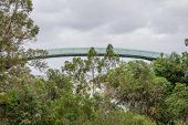 foto of observed  - A view of an observation walking bridge in Kings Park and Botanical Gardens in Perth Western Australia - JPG