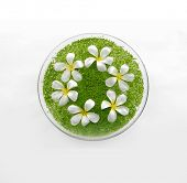 stock photo of frangipani  - bowl of with white frangipani with green small leaves in water - JPG