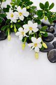 pic of gardenia  - Lying down gardenia on black pebbles  - JPG