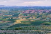 foto of butt  - Farmland at dusk Steptoe Butte State Park Oakesdale Washington - JPG