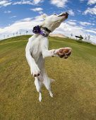 stock photo of dog eye  - A distorted view of a dog jumping - JPG