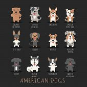 picture of catahoula  - Set of american dogs eps10 vector format - JPG