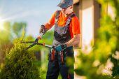 picture of tree trim  - Professional Gardener Trimming Plants in the Garden - JPG