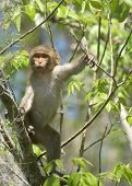 picture of tarzan  - (Wild Florida Monkey) Thank you very much for looking