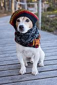 Portrait Of Cute Jack Russell Dog Wearing In Knitted Beret And Scarf Sitting On The Wooden Boardwalk poster