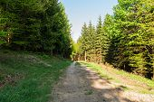 Bright Green Forest Natural Walkway In Sunny Day Light. Sunshine Forest Trees. Sun Through Vivid Gre poster