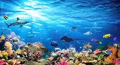 Underwater Scene With Coral Reef And Exotic Fishes poster