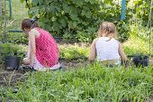 Closeup Image Of Two Teenage Girls Weeding Garden Bed. Female Gardening Weeding Weed Plants Grass In poster