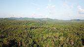 Aerial photo palm forest. Oil Palms and Coconut Palms poster