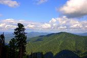View Of Mountain Taiga From The Top Of The Hill Through A Pine Forest. poster