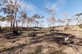Bushfire Damage