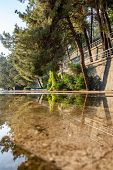 Tall Pines Are Reflected In The Water. Big Tall Pine Tree Near Lake With Reflection On Blue Water. N poster