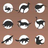 Set Cartoon Endangered Wild Australian Animals Tasmanian Devil Echidna Dingo Jerboa Ostrich Kiwi Pla poster