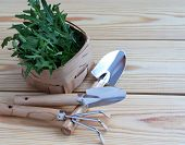 Mini Garden Tools With Green Plants On Wooden Background