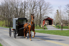 stock photo of carriage horse  - An Amish horse and carriage travels on a rural road in Lancaster County - JPG