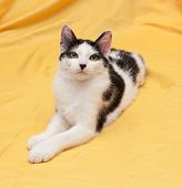 picture of heartwarming  - Skinny black and white kitten lying on golden background - JPG
