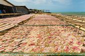 stock photo of squid  - Squid lay on net Dried Squid traditional squids drying in a idyllic fishermen village Thailand - JPG