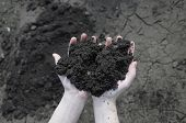 picture of rich soil  - Soil in the open palm dry soil on background - JPG