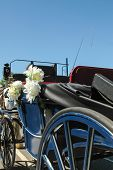 foto of carriage horse  - partial view of a traditional horse - JPG