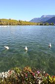 image of annecy  - Overview of Lake of Annecy and mountains in france - JPG