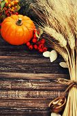 picture of fall-wheat  - Autumn composition  - JPG