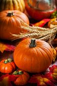 pic of cornucopia  - Traditional pumpkins for Thanksgiving and  Halloween in autumn colors - JPG