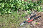 image of trimmers  - Tree branch trimmers laying on the ground - JPG