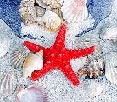 foto of slug  - Starfish - JPG