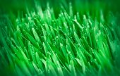 picture of grass area  - Spring grass  - JPG