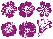 picture of hibiscus  - Hibiscus silhouettes vector set - JPG