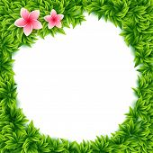 picture of frangipani  - Fresh green spring leaves and tropical flowers frame with central blank white copyspace and pink frangipani flowers in square format - JPG