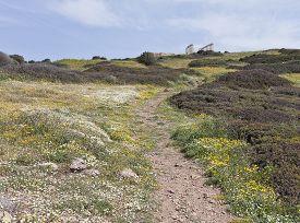 stock photo of poseidon  - Colorful flowers on a slope towards the Mediterranean Sea - JPG